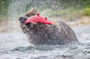 Sockeye Bear Blender